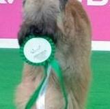 Oreana Baby Puppy Amsterdam 1e prijs