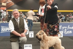 Int. Hanzeshow Zwolle 2019 BOB: A Gift For Life From RoBi's House Judge: Mr. Peter Friedrich Berchtold (AT)
