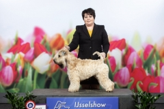 Int. IJsselshow Zwolle 2019 BOB: A Gift For Life From RoBi's House