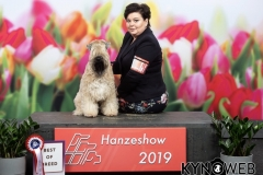 Int. Hanzeshow Zwolle 2019 BOB: A Gift For Life From RoBi's House