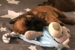 B-Pup slaapt
