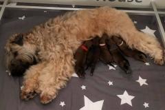 Oreana met haar B-pups net geboren
